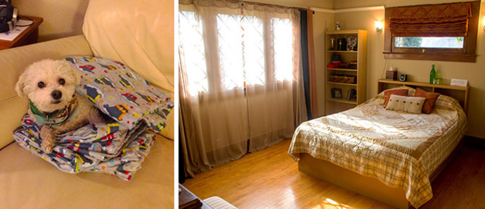 bedroom at morgans homestay along with her dog