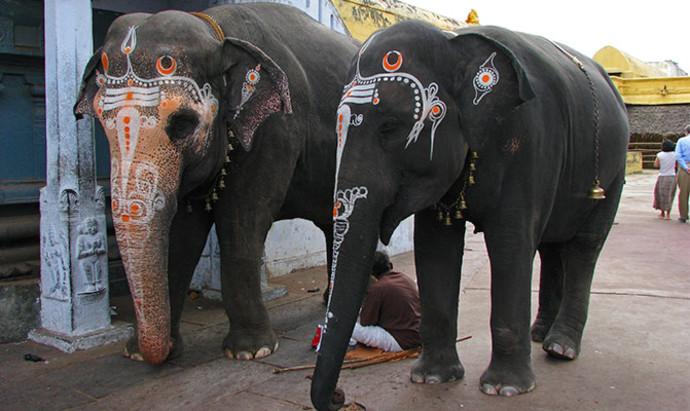 painted elephants in Kanchipuram