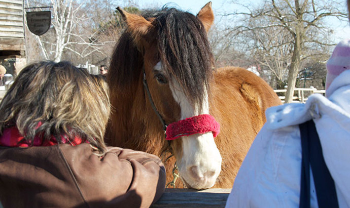 shaggy-haired horse being petted by onlookers at Riverdale Farm in Cabbagetown, Toronto
