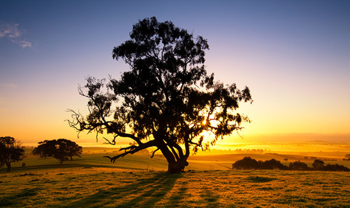 Sun rises over the Clare Valley in South Australia