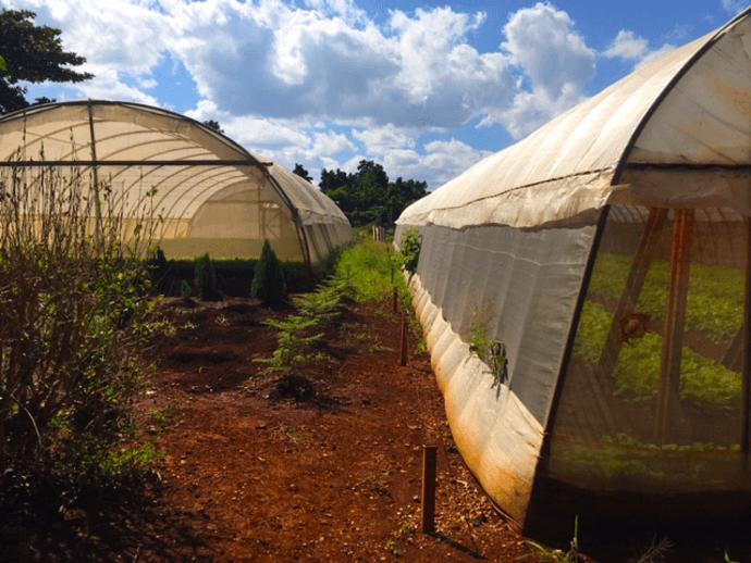 Polytunnels at the Alamar Organicoponico in Havana